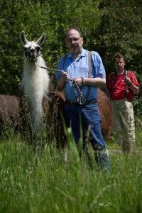 Lamas – die Delfine der Wiese
