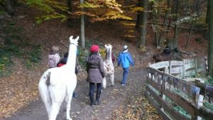 Gassi gehen mit Lamas