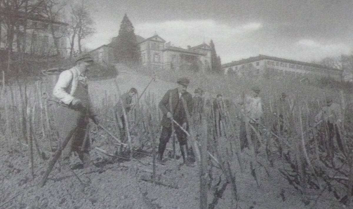 Historisches Foto des Weinbaus auf dem Eichberg