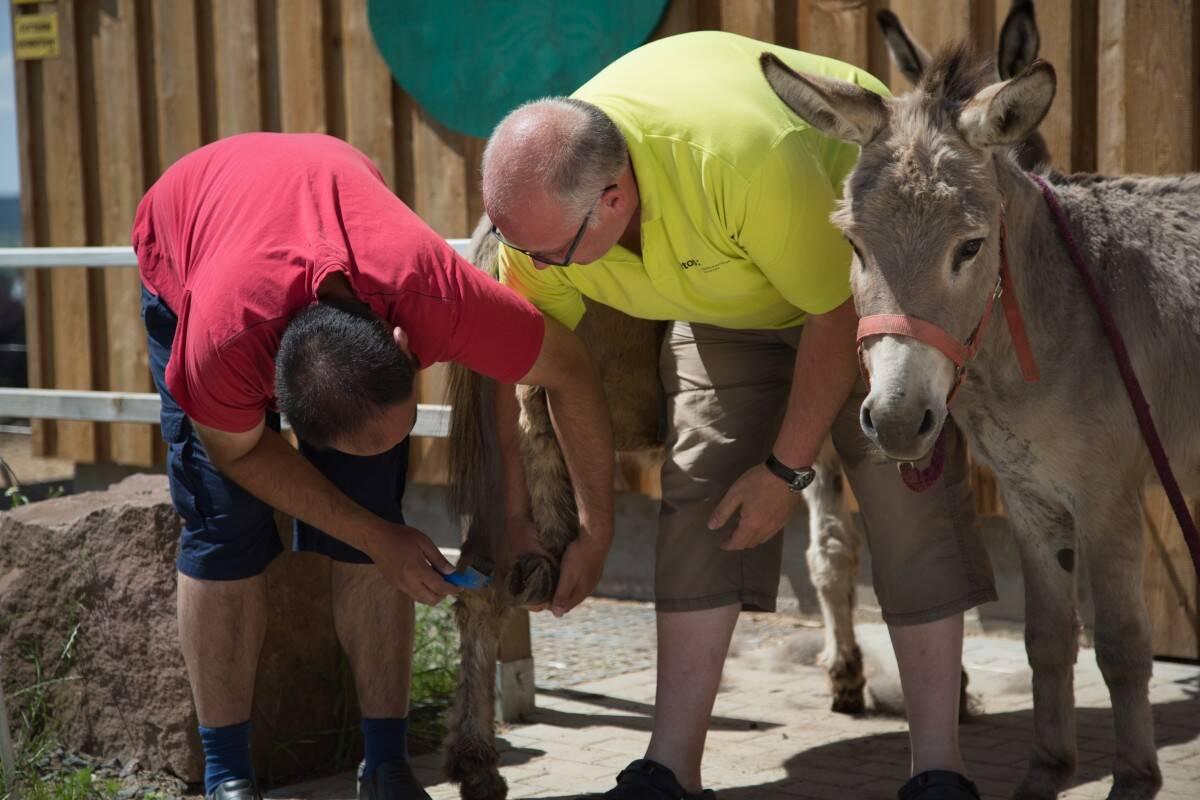 Auch Esel brauchen regelmäßige Pflege